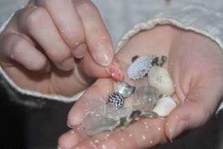 Seashell and Sea Glass Hunt