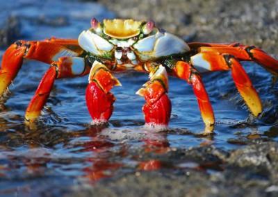 Crabbing in Long Island