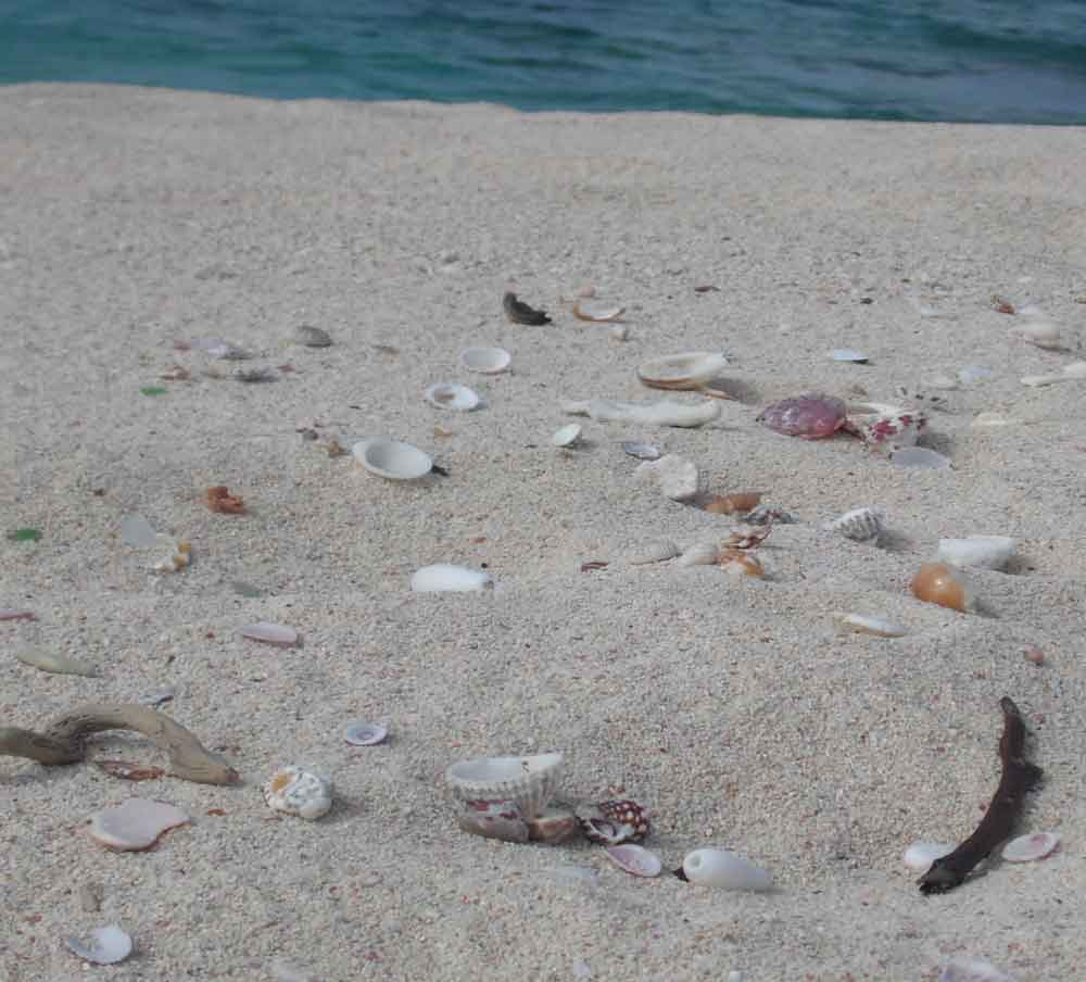Seashell Hunting Bahamas