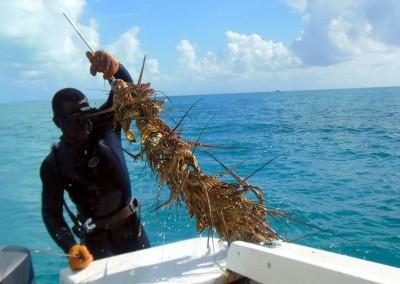 Bahamas Lionfish Hunt