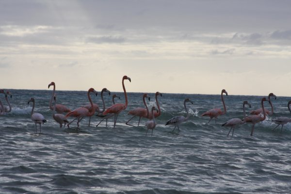 Bahamas Bird Watching