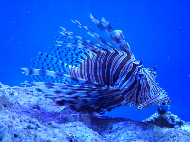 Lionfish Hunt Long Island Bahamas