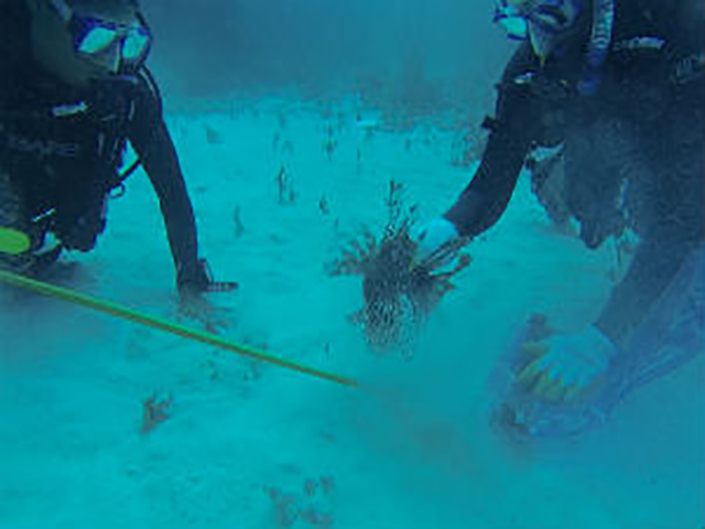 Long Island Bahamas Lionfish Hunting Trip