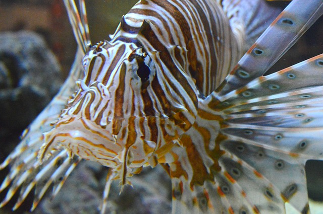 Lionfish Hunt Bahamas